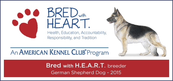 Breeding Oversized Large German Shepherds Big Dogs In The Mid West