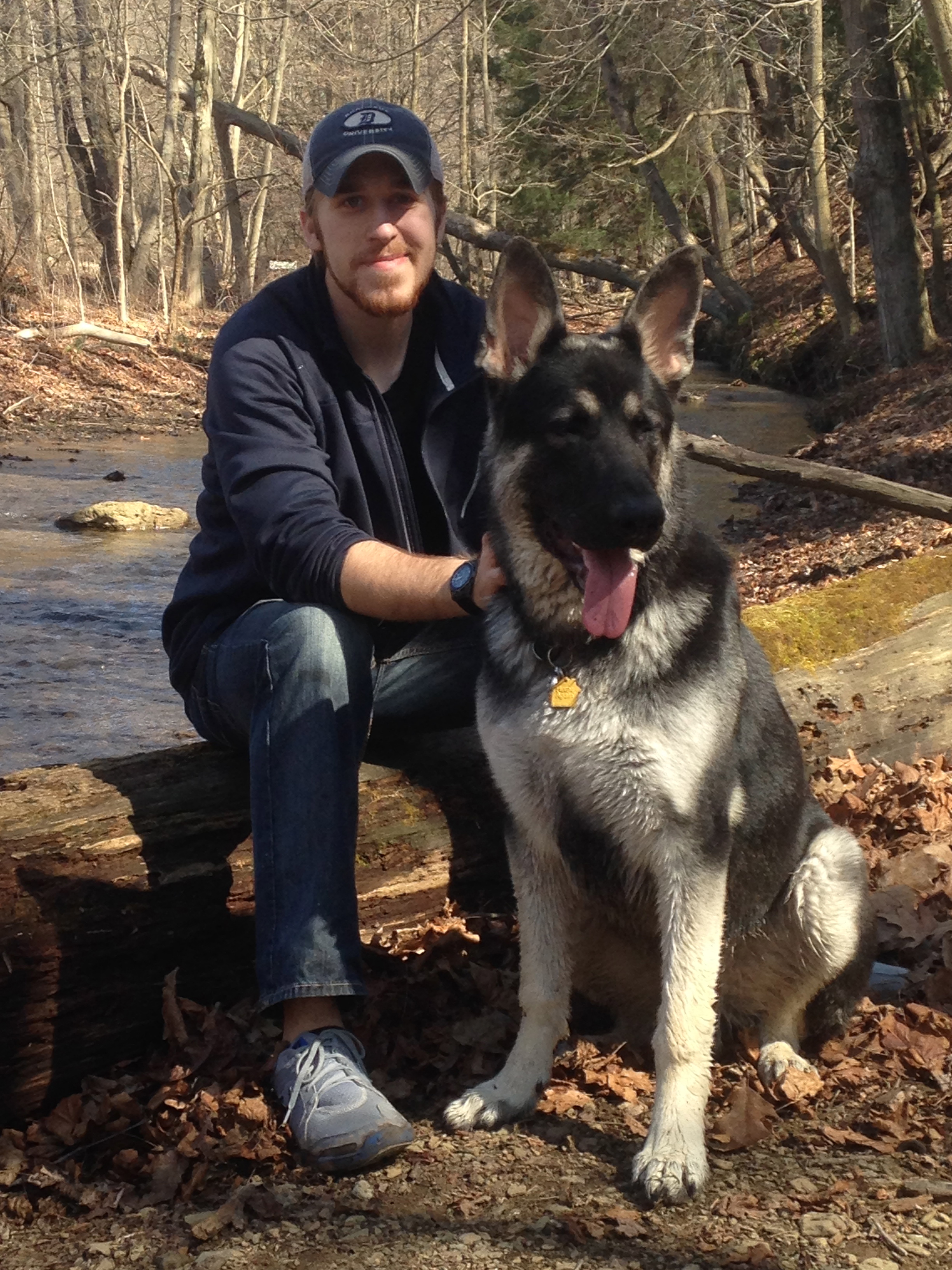 Larg Black And Silver German Shepherds For Sale