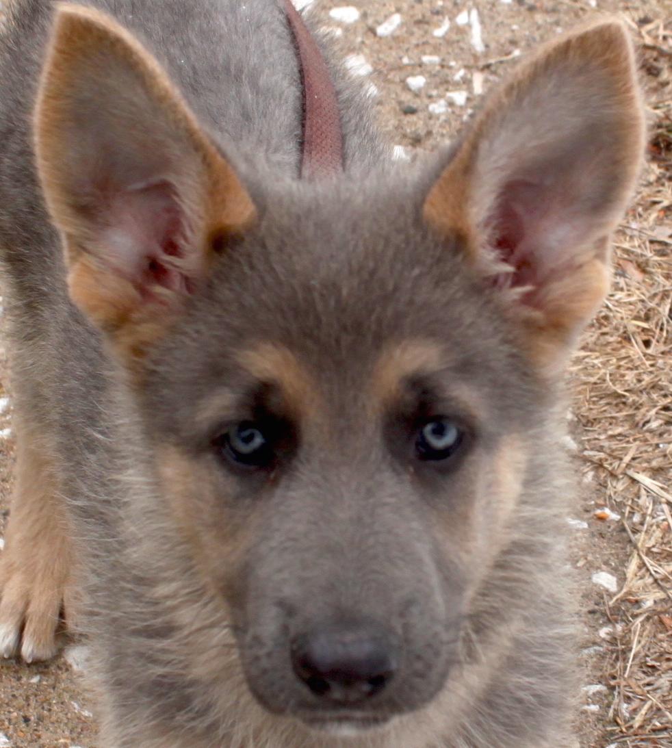 Dog Misty Eyes