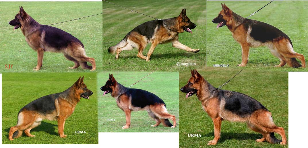 east german gsd breeders